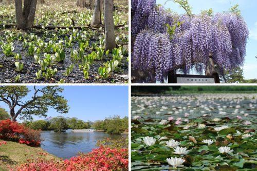 大沼国定公園(春の花)