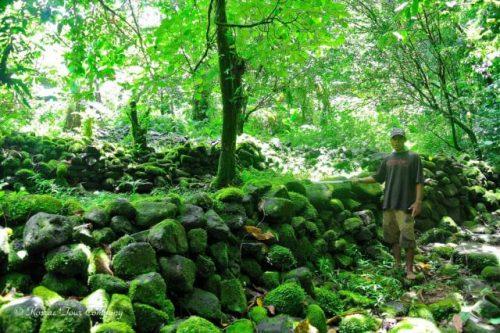 ジャングルに眠るメンケ遺跡(コスラエ州)