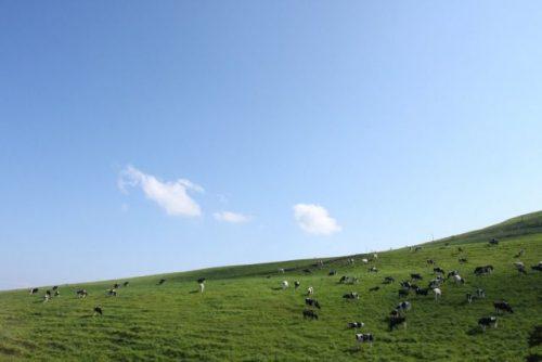 上士幌町 ナイタイ高原牧場